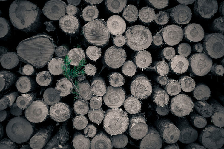 Abundance Backgrounds Close-up Cross Section Day Deforestation Environmental Issues Firewood Forestry Industry Fossil Fuel Fuel And Power Generation Heap Large Group Of Objects Log Lumber Industry No People Outdoors Stack Timber Wood - Material Woodpile