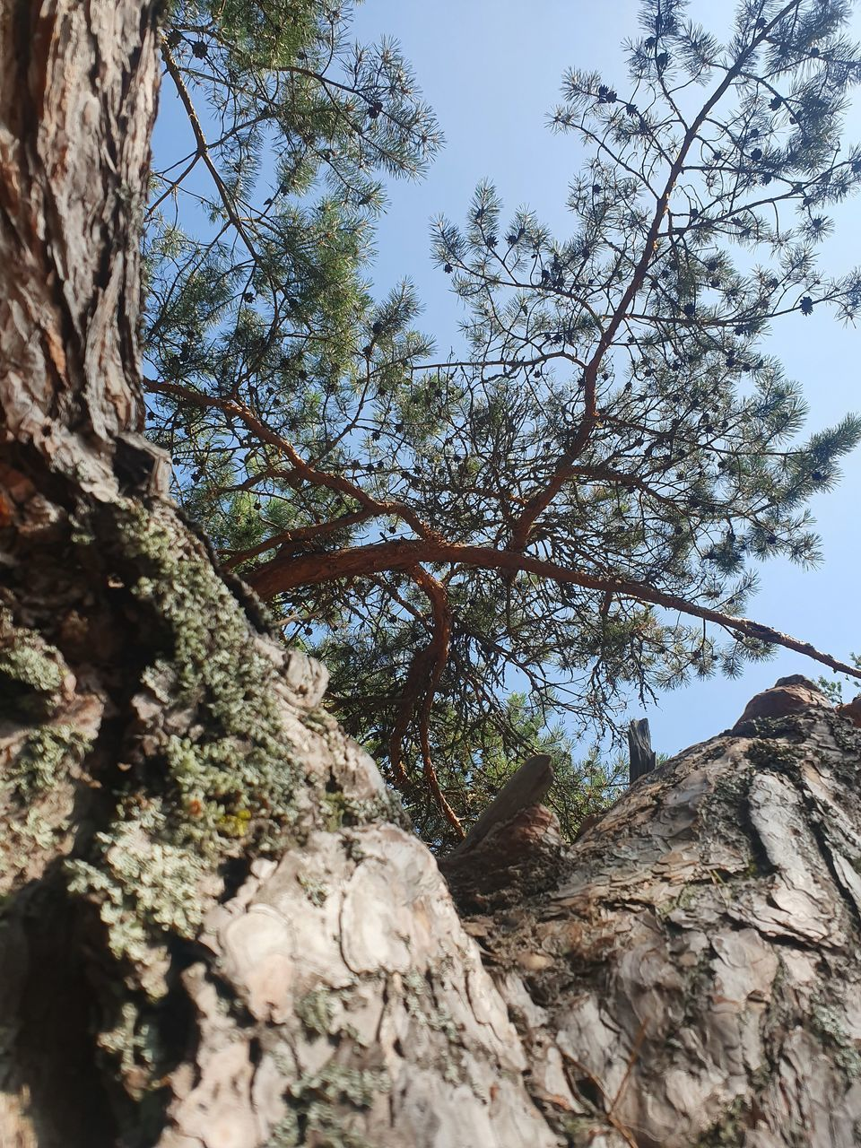 tree, plant, sky, low angle view, nature, branch, tranquility, growth, beauty in nature, rock, day, tree trunk, trunk, no people, land, tranquil scene, rock - object, rock formation, outdoors, scenics - nature