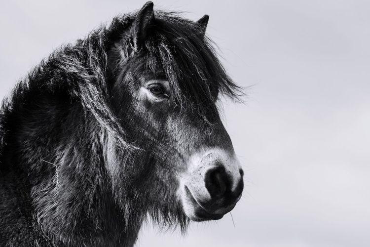 Close-up portrait of pony against sky