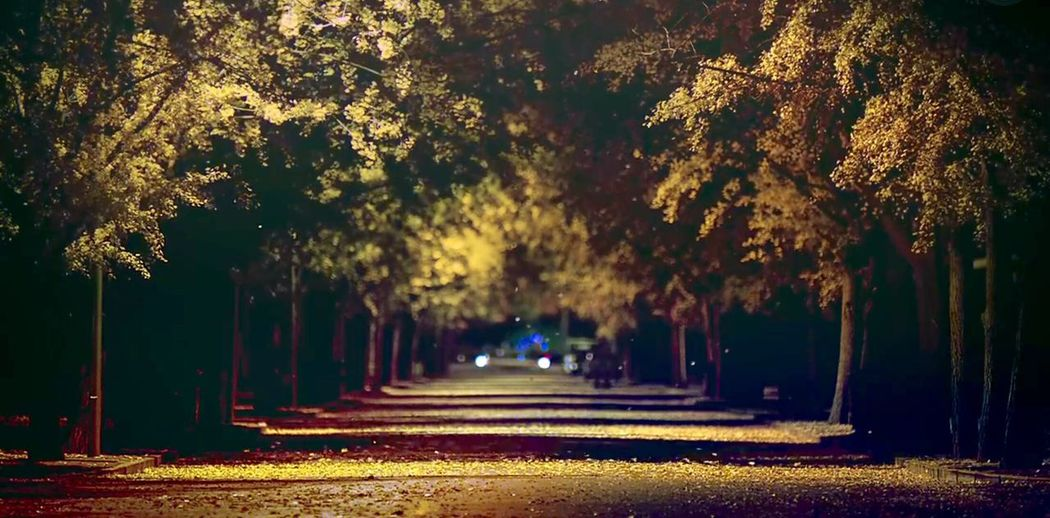 I love it so much!!!!!! Relaxing Light And Shadow Beautiful Enjoying Life Quiet Moments Beautiful View Good Mood First Eyeem Photo EyeEm Best Shots New Perspective Of Life  (null)Showcase: January IiPone 6 Plus Wonderful Amazing Ipone Quiet Trees Night Photography Night View Leaves Yellow Bright Warm Light