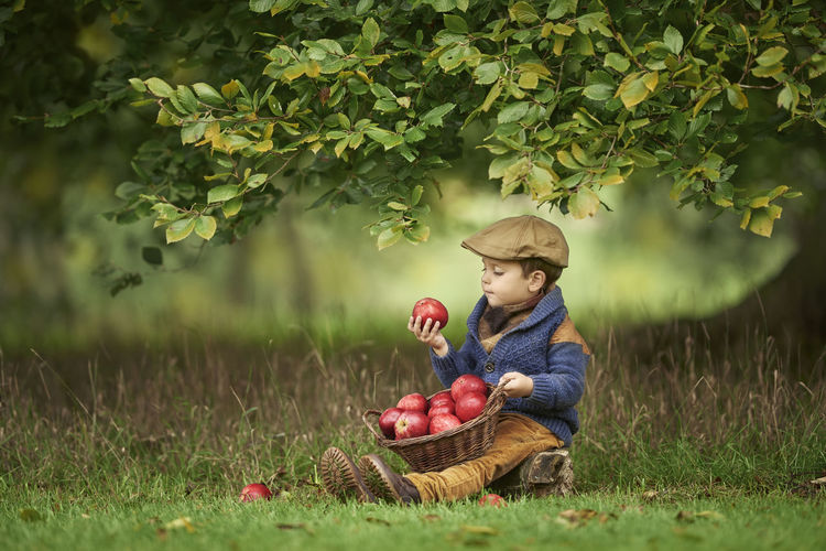Little caucasian boy is sitting in the grass under a tree with a basket full of apples