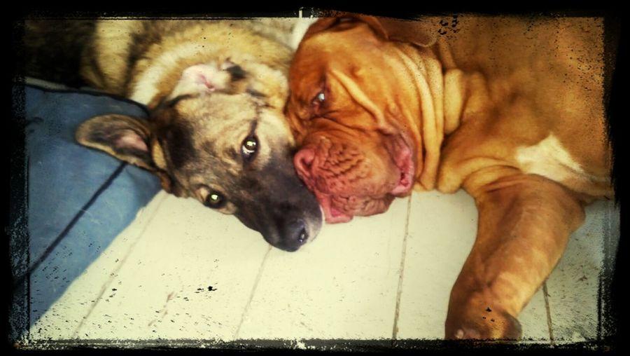 Dogs Love♡ Dog Love Taking Photos