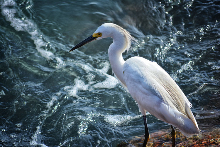 Close-up of heron in water