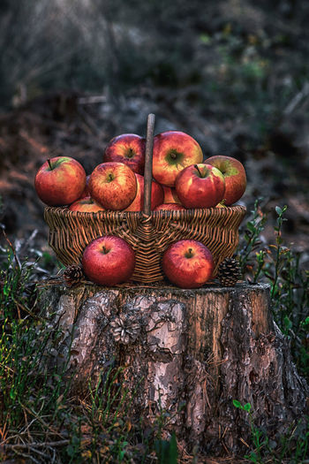 Fall Autumn Tree Botanical Pine Cone Apple Apples Apple - Fruit Fruit Basket Forest Woods Wood Creativity Creative Photography CreativePhotographer Colourful Colour Wood - Material Fruit Tree Red Close-up Food And Drink