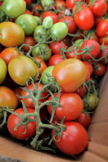 tomato in the