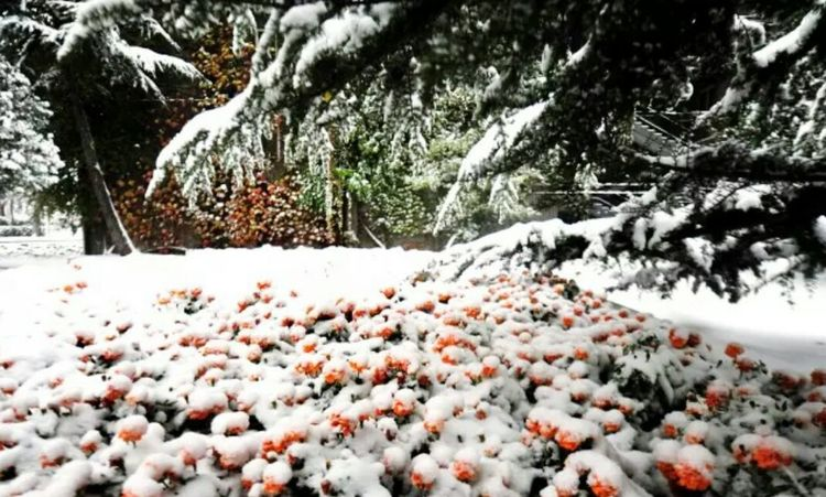 Winter Wonderland Enjoying Life First Snow My College Orange To Be Continued...