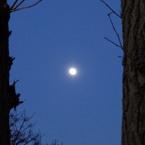 2本の木の間の月 コンデジの限界 XQ1 デジカメ 写真好きな人と繋がりたい