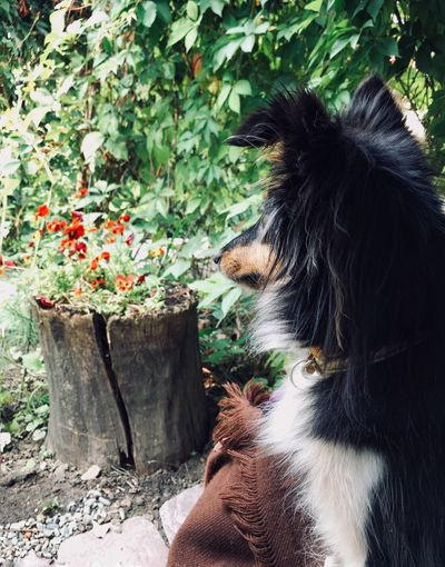 Rear view of woman with dog against plants