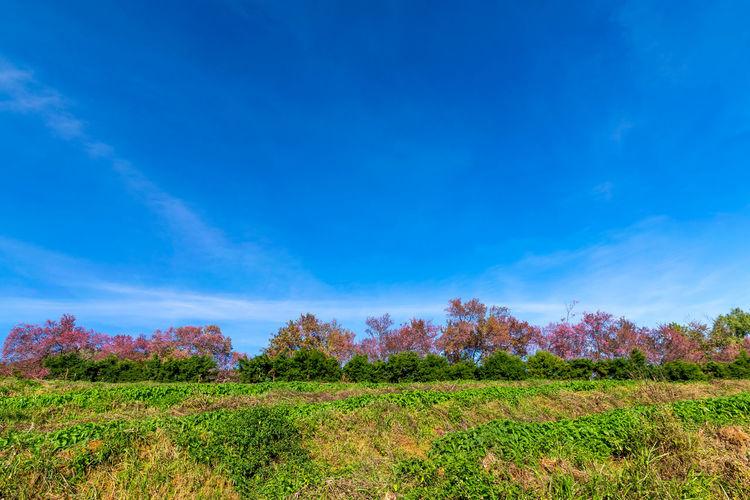 Plants on field against blue sky