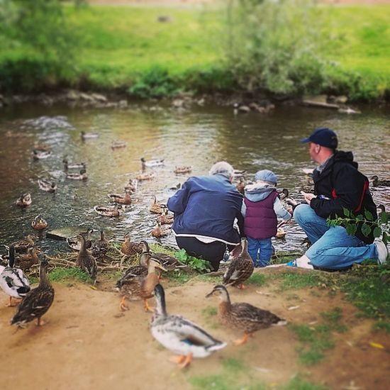 Feeding the ducks. Cute Child Toddler  Ducks Bread Daddy Grandad River