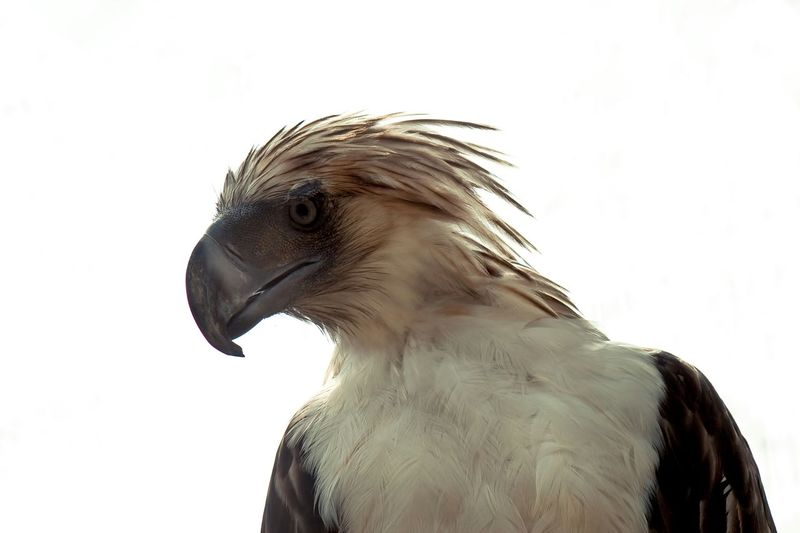 """Walk on home boy"" Eagle Power Birds Animals"