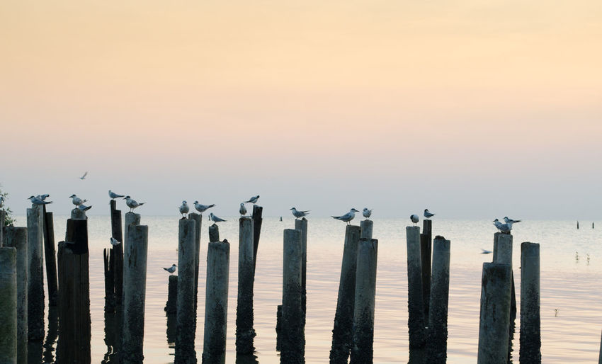 Wooden posts in sea against clear sky during winter
