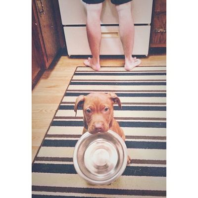 Nora wants dinner, too. Puppy Pit Pitsofinstagram