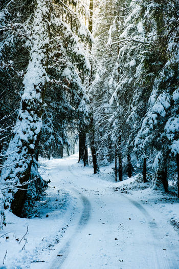 Snow covered street amidst trees during winter