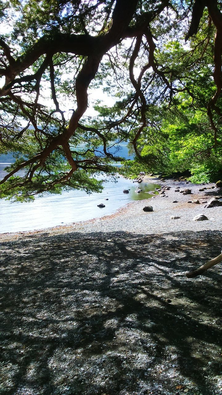 tree, nature, water, beach, day, tranquil scene, sand, beauty in nature, no people, tranquility, outdoors, scenics, animal themes, sea, one animal, growth, branch, sky, bird, mammal