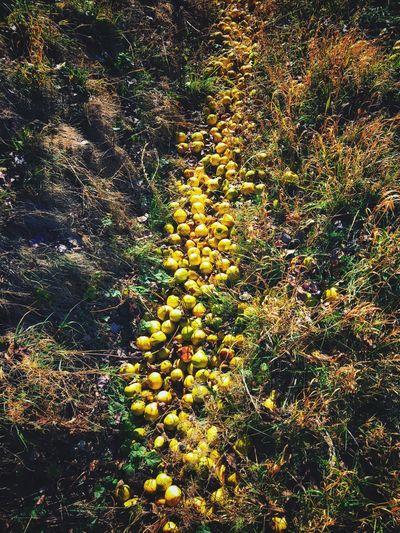 Roadside Ditch Pears Sunlight Tree Land