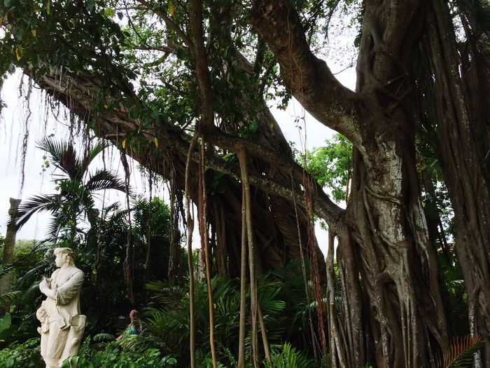 Roots of Glory. (Thanks for the name Cam Cam.) Miami Doral Florida Vizcaya Vizcaya Museum Vizcaya Gardens Garden Leaves Texture Nature Plants Fine Art Photography On The Way Showcase July