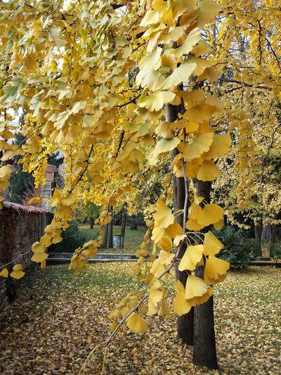 Leaves on tree trunk