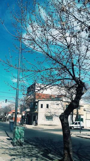 Calle Streetphotography Vscocam Street Photo Arboles , Naturaleza Camino Cielo Y Nubes  Cielo Azul Arbol Solitario