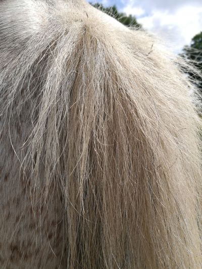 white horse tail Horse Tail Horse Tail White Hair Part Of Field Agriculture Textured  Sky Close-up Farmland Farm