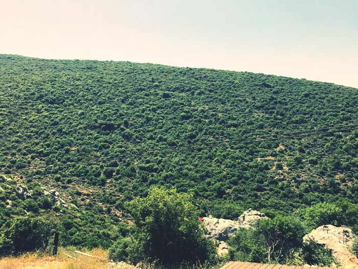 Arnaoon Village Batroun Tree Pine Tree Nature Pinaceae Growth Outdoors Day Green Color Tranquility Forest No People Beauty In Nature Landscape Scenics Sky Tree Area Plant Lush - Description Mountain Tea Crop First Eyeem Photo