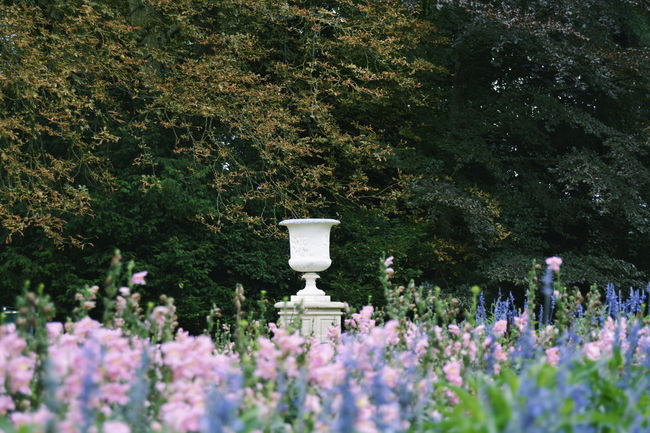 Art And Craft Beauty In Nature Day Flower Flowering Plant Formal Garden Fragility Freshness Garden Growth Human Representation Male Likeness Nature No People Ornamental Garden Outdoors Plant Purple Representation Sculpture Tree Vulnerability
