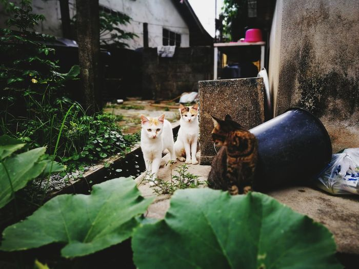 P9leica Capturedonp9 Maximum Closeness First Eyeem Photo P9 Huawei Leicacamera P9shooting Pets One Animal