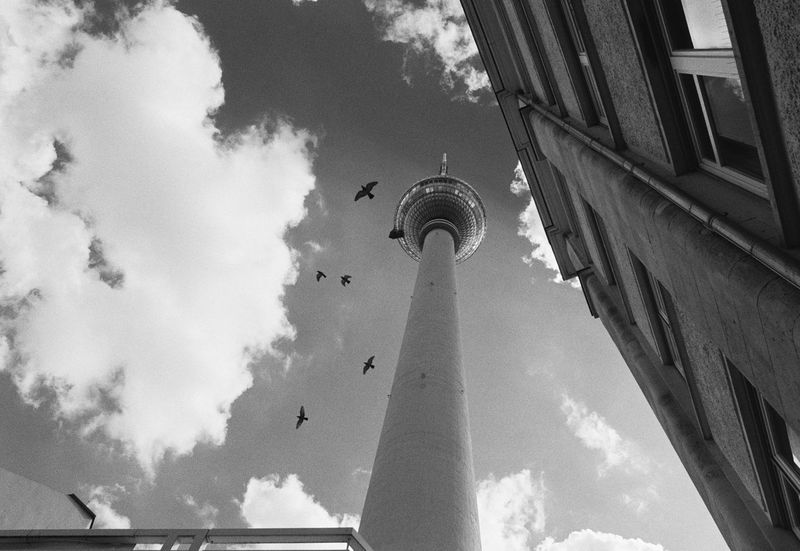 looking up... Analogue Photography Film Nikon FA Animal Themes Animals In The Wild Architecture Bird Black And White Blackandwhite Building Exterior Built Structure City Cloud - Sky Day Film Photography Filmisnotdead Looking Up Low Angle View Monochrome No People Outdoors Schwarzweiß Sky TV Tower Alexanderplatz