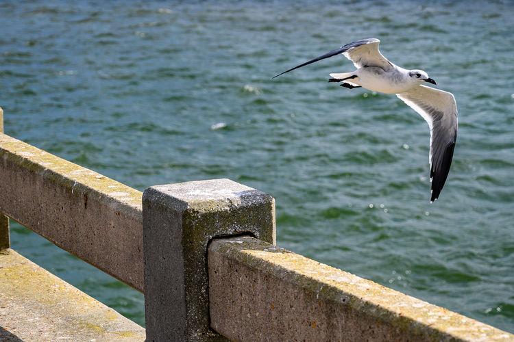 Flight Animal