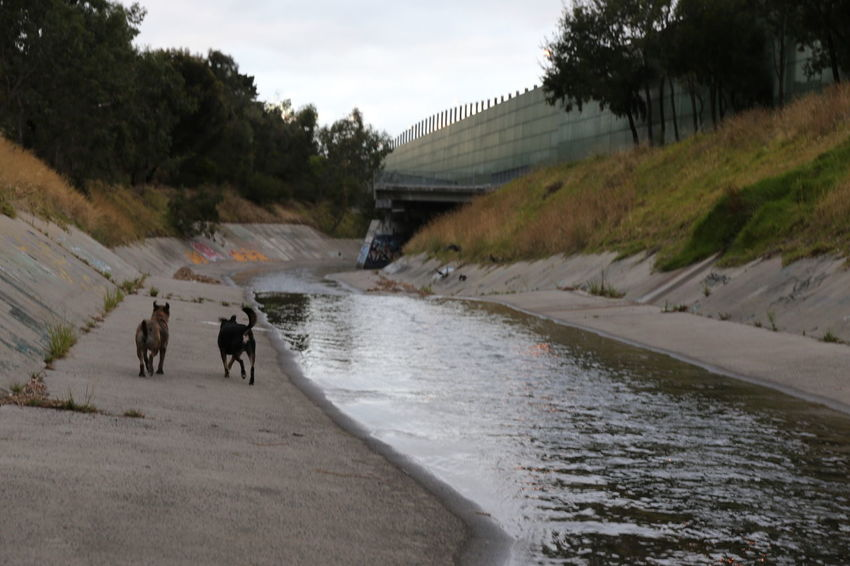 Architecture Canal Concrete Riverbed Day Dogs Domestic Animals Dreary Weather  Footpath Happy Dog Mammal Men Nature Outdoors Real People Runaways Sky Storm Drain Strays The Way Forward Tramps Tree Water