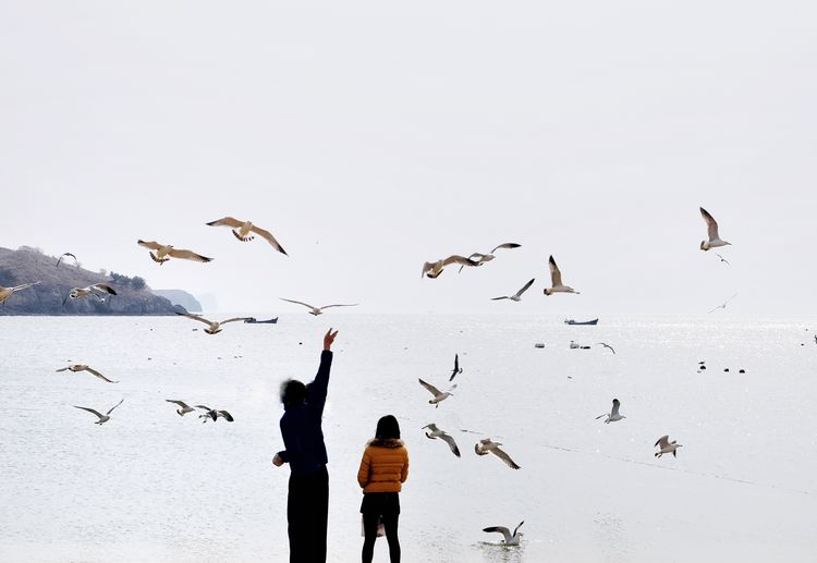 Rear view of woman with daughter feeding seagulls against clear sky