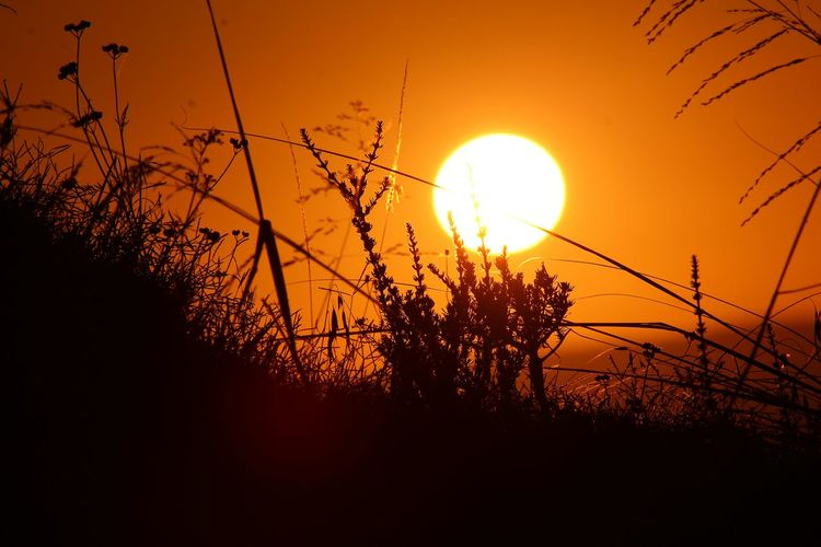 Sunset African Beauty Africa South Africa