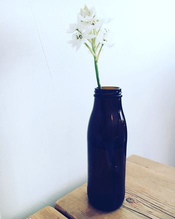 ~ solo Close-up Coffeshop Day Decoration Flower Focus On Foreground Fragility Freshness Growth Indoors  Lifestyle Lifestyles Nature No People Plant Stem Still Life Vase The Shop Around The Corner
