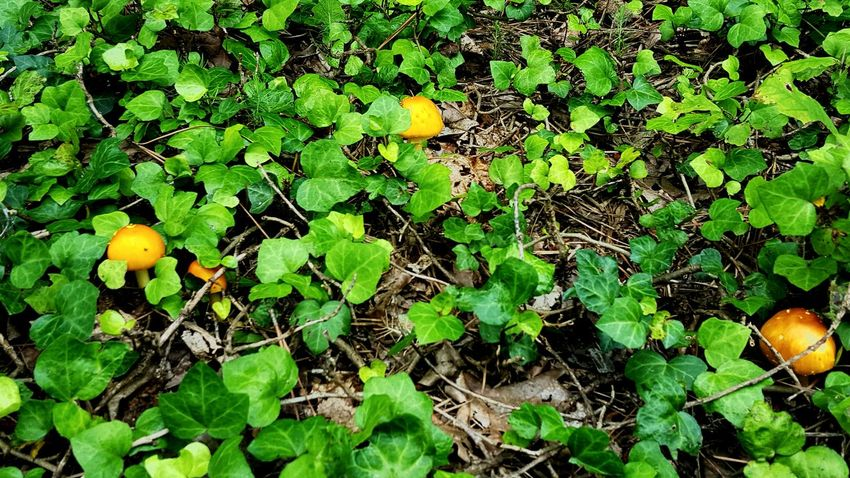Wild Mushrooms Vines Verdant In Living Color EyeEm Nature Lover Protecting Where We Play Pattern Pieces