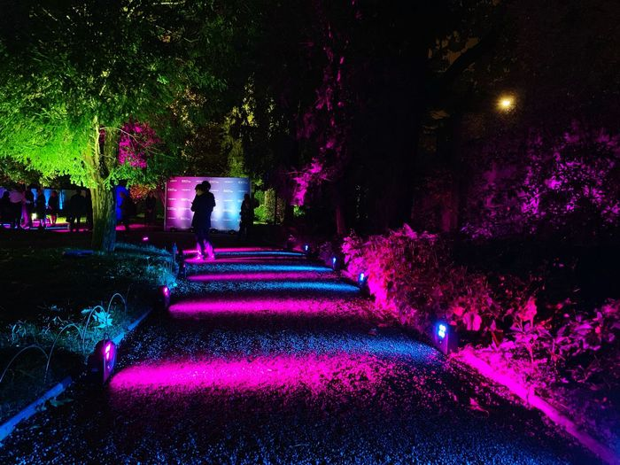 Color street Milano Illuminated Night Plant Tree Nature Decoration No People Architecture Outdoors Lighting Equipment City Water Park Multi Colored Park - Man Made Space Light - Natural Phenomenon Nightlife Light Direction Pink Color