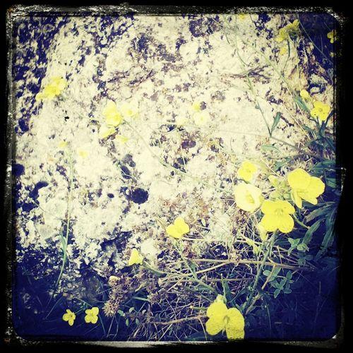 Flowers Autumn Crimea