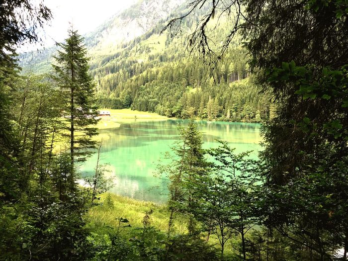 Tree Water Tranquil Scene Scenics Forest Mountain Tranquility Beauty In Nature Non-urban Scene Nature Idyllic Lake Green Color Calm Solitude Reflection Remote Majestic Growth Eyem Nature Lovers  Eyem Best Shots Nature_collection Eyemphotography Austria Europe EyeEm Best Shots - Nature