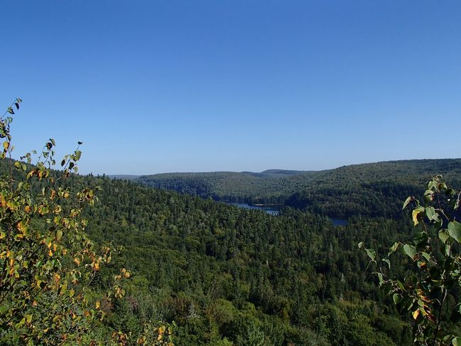 Forêt mixte laurentienne - Laurentian Mixed Forest (Parc national de la Mauricie) Forest Sky Plant Growth Clear Sky Beauty In Nature Tranquility Scenics - Nature Nature