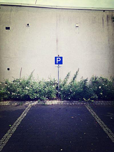 Parkplatz Mosel Brauneberg Plants