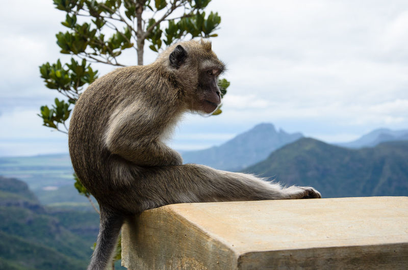 Monkey Sitting On Built Structure Against Sky
