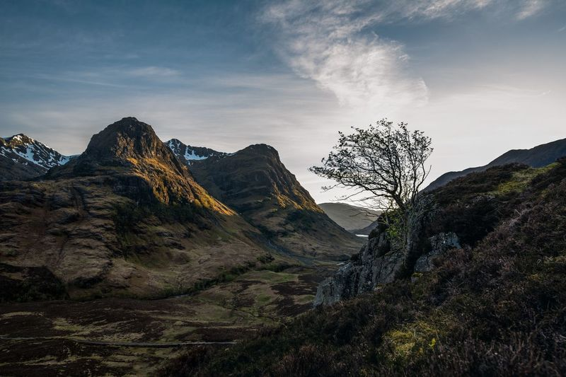 Glencoe Tree Beauty In Nature Glencoe Scotland Landscape Mountain Mountain Peak Mountain Range Nature No People Plant Remote Scenics - Nature The Three Sisters