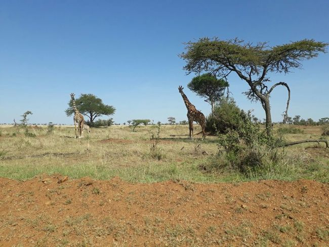 Just passed at serengeti national park in Tanzania