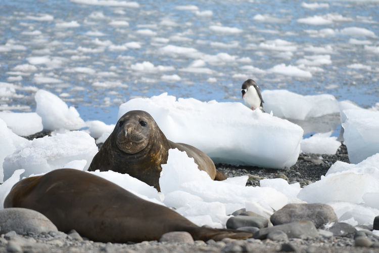 Sea lions at beach during winter