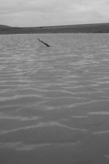 Branch Fall Down Flood Near And Far Near The Sea Water