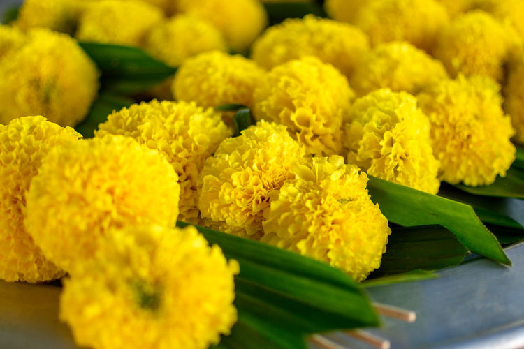 Close-up of yellow flowering plant for sale in market