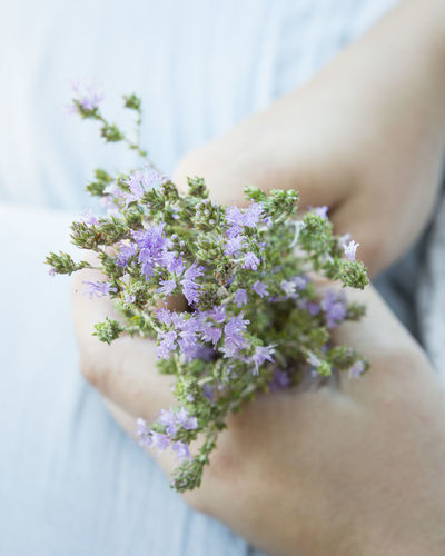 Cropped Hands Of Woman Holding Flowers