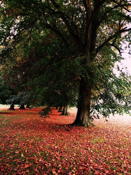Photography Beauty In Nature Tree Autumn No People Tranquil Scene Leaves Changing Color Reds Yellows Geeen Scenics Landscape Sky Day Autumn
