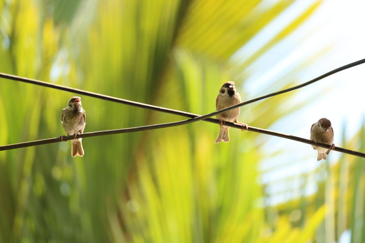 birds Outdoors