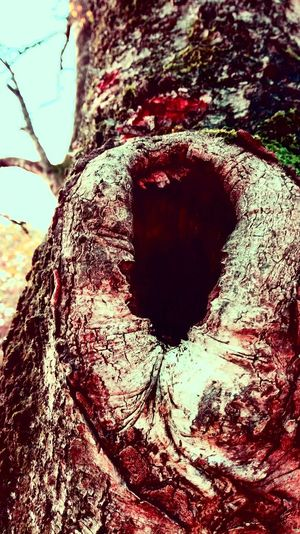 Day Outdoors Nature Hole In The Tree Beauty In Nature The Still Life Photographer - 2018 EyeEm Awards