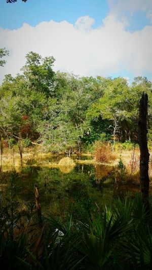 Pond Reflection On A Hike In The Forest Skunk Ape East Coast Bigfoot Denseforest